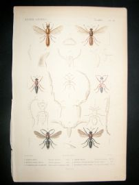 Cuvier C1840 Antique Hand Col Print. Insects 118